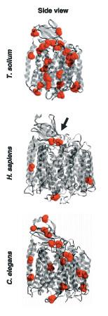 Cisteinas en citocromo Coxidasa