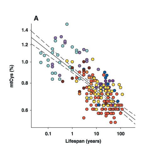 Diferencias entre especies animales en el porcentage decisteinas