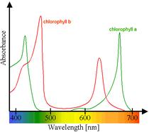 Espectro de absorción de la clorofila a (verde) y b (rojo). Fuente wikipedia)